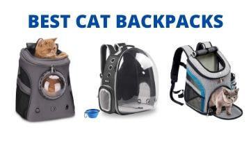 Best Cat Backpack, Best Cat Backpacks